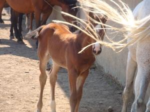 Foal, Matera, Italy www.eileenslovak.com